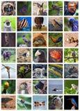 Ζώα OD ο κόσμος Στοκ Εικόνες