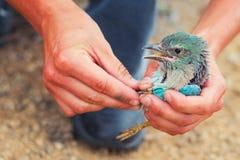 Ζώνη πουλιών Στοκ εικόνες με δικαίωμα ελεύθερης χρήσης