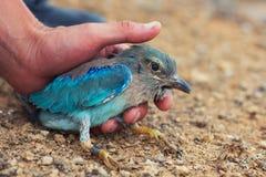 Ζώνη πουλιών Στοκ Φωτογραφίες