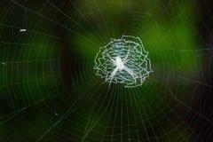 Ζώο, έντομο στο δάσος Στοκ Εικόνες