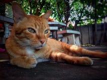 ζώο κατοικίδιων ζώων γατών στοκ φωτογραφία