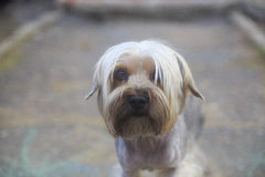 ζώο κατοικίδιων ζώων σκυλιών Στοκ εικόνες με δικαίωμα ελεύθερης χρήσης