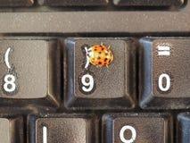 Ζώο λαμπριτσών των εντόμων Insecta κατηγορίας στοκ εικόνα με δικαίωμα ελεύθερης χρήσης