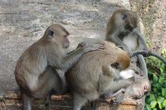 Ζώο, οικογένεια Monky Στοκ φωτογραφία με δικαίωμα ελεύθερης χρήσης