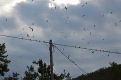 Ζώο πουλιών Στοκ Εικόνες