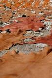 ζώο που χρωματίζεται ξήραν& Στοκ φωτογραφίες με δικαίωμα ελεύθερης χρήσης