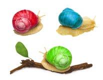 Ζώο σαλιγκαριών τα αφηρημένα χρώματα που απομονώνονται με Στοκ Εικόνες