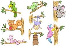 Ζώο σε ένα δέντρο Στοκ εικόνες με δικαίωμα ελεύθερης χρήσης