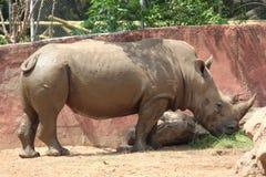Ζώο στον ταϊλανδικό ζωολογικό κήπο στοκ φωτογραφία