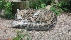 Ζώο ύπνου Στοκ φωτογραφία με δικαίωμα ελεύθερης χρήσης