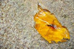 Ηλέκτρινα έντομα Στοκ Φωτογραφίες