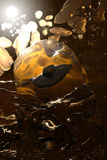 ηλέκτρινος που παγιδεύ&epsilo Στοκ φωτογραφία με δικαίωμα ελεύθερης χρήσης