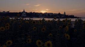 Ηλίανθοι και ζωηρόχρωμο ηλιοβασίλεμα στην όχθη ποταμού, κέντρο πόλεων απόθεμα βίντεο