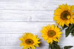 ηλίανθοι μητέρων s χαιρετισμού πλαισίων ημέρας καρτών Στοκ Εικόνες