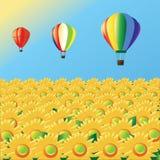 ηλίανθοι μπαλονιών αέρα Στοκ Φωτογραφία