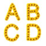 ηλίανθος αλφάβητου Στοκ εικόνες με δικαίωμα ελεύθερης χρήσης