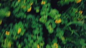 ηλίανθος λουλουδιών φιλμ μικρού μήκους