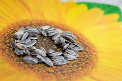 ηλίανθος σπόρων Στοκ Φωτογραφίες