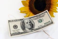 ηλίανθος 100 λογαριασμών κίτρινος Στοκ φωτογραφία με δικαίωμα ελεύθερης χρήσης