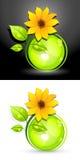 ηλίανθος eco κουμπιών Στοκ Εικόνες