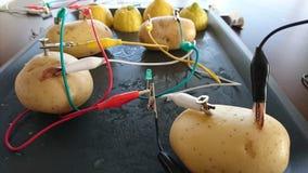 Ηλεκτρική πατάτα Στοκ εικόνες με δικαίωμα ελεύθερης χρήσης