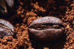 Ηλεκτρικός μύλος καφέ με τα ψημένα φασόλια καφέ εσωτερικά και την κινηματογράφηση σε πρώτο πλάνο σιταριών καφέ Στοκ εικόνες με δικαίωμα ελεύθερης χρήσης