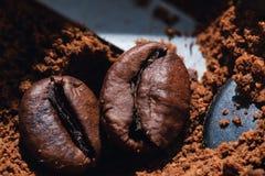 Ηλεκτρικός μύλος καφέ με τα ψημένα φασόλια καφέ εσωτερικά και την κινηματογράφηση σε πρώτο πλάνο σιταριών καφέ Στοκ εικόνα με δικαίωμα ελεύθερης χρήσης