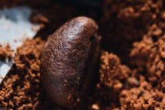 Ηλεκτρικός μύλος καφέ με τα ψημένα φασόλια καφέ εσωτερικά και τη τοπ άποψη σιταριών καφέ Στοκ Εικόνα