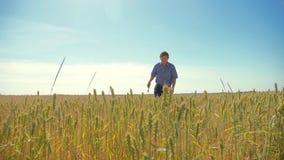 Ηληκιωμένος αγροτών που τρέχει στην έννοια ατόμων γεωργίας τομέων Νεαροί βλαστοί σίτου σε ένα χέρι αγροτών ` s Farmer που περπατά απόθεμα βίντεο