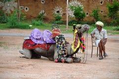 Ηληκιωμένος με την καμήλα του Στοκ Εικόνα