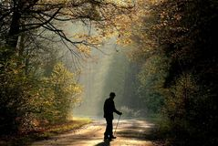 ηληκιωμένος στο δάσος φθινοπώρου στην ανατολή Στοκ Εικόνα