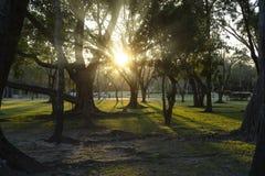 Ηλιακή είναι η ενέργεια που ο κόσμος χρειάζεται Το δάσος είναι εργοστάσιο, ισχυρή παραγωγή στοκ εικόνα