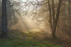 Ηλιαχτίδες μέσω της misty δασόβιας πορείας πρωινού στην αυγή στοκ φωτογραφία με δικαίωμα ελεύθερης χρήσης