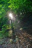 Ηλιαχτίδες πρωινού μέσω του πολύβλαστου δάσους του πάρκου Kaposia Στοκ φωτογραφία με δικαίωμα ελεύθερης χρήσης