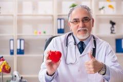 Ηλικίας αρσενικός καρδιολόγος γιατρών με το πρότυπο καρδιών στοκ εικόνες με δικαίωμα ελεύθερης χρήσης