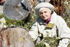 Ηλικιωμένες γυναίκες με το camomille Στοκ Φωτογραφία