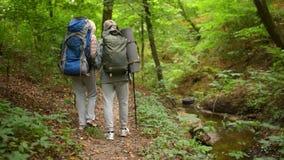 Ηλικιωμένο ζεύγος της Νίκαιας που περπατά κατά μήκος της πορείας στο δάσος απόθεμα βίντεο