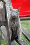 Ηλικιωμένο πορτρέτο γατών Στοκ Εικόνες
