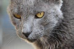 Ηλικιωμένο πορτρέτο γατών Στοκ φωτογραφίες με δικαίωμα ελεύθερης χρήσης