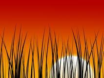ηλιοβασίλεμα ανασκόπησ&et Στοκ Εικόνα