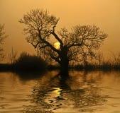 ηλιοβασίλεμα αντανακλά&s Στοκ Εικόνες