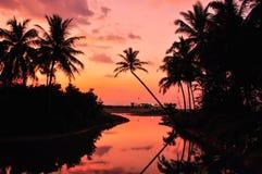 Ηλιοβασίλεμα βραδιού καρύδων Στοκ εικόνες με δικαίωμα ελεύθερης χρήσης