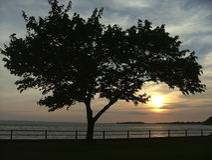 ηλιοβασίλεμα επιλογής Στοκ φωτογραφίες με δικαίωμα ελεύθερης χρήσης