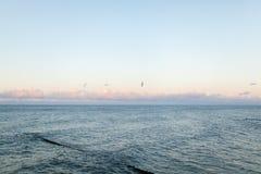 Ηλιοβασίλεμα θάλασσας με seagull στοκ εικόνα
