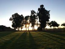 Ηλιοβασίλεμα και δέντρα στο Σαν Ντιέγκο στοκ εικόνες