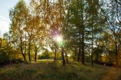 Ηλιοβασίλεμα και δέντρα φθινοπώρου στην αγγλική επαρχία Στοκ εικόνα με δικαίωμα ελεύθερης χρήσης