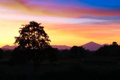 Ηλιοβασίλεμα και ελαφρύς δίκαιος ήλιος ζωηρόχρωμο σε όμορφο ουρανού και σύννεφων με το δέντρο σκιαγραφιών στη δασώδη περιοχή στοκ εικόνα