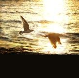 Ηλιοβασίλεμα και πετώντας πουλί Στοκ Φωτογραφίες