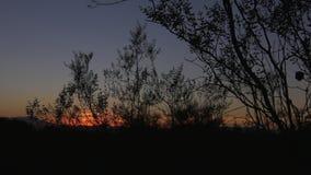 Ηλιοβασίλεμα και σκιαγραφία των δέντρων απόθεμα βίντεο