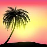Ηλιοβασίλεμα και τροπικός φοίνικας με το ζωηρόχρωμο υπόβαθρο τοπίων, αρχείο vector10 διανυσματική απεικόνιση